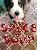 SPICE SOUP